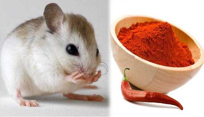 Cách đuổi chuột khỏi phòng hoàn toàn tự nhiên