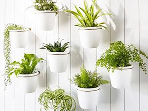top 10 cây trồng trong nhà vệ sinh